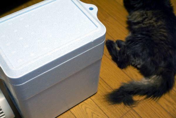 猫 暑さ対策 自作クーラー 効果